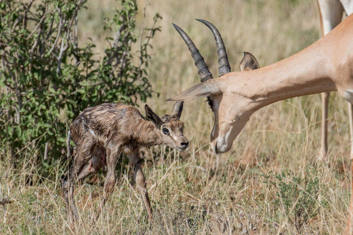 Naissance-Kenya
