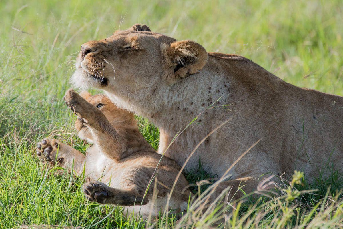 Farniente - Kenya