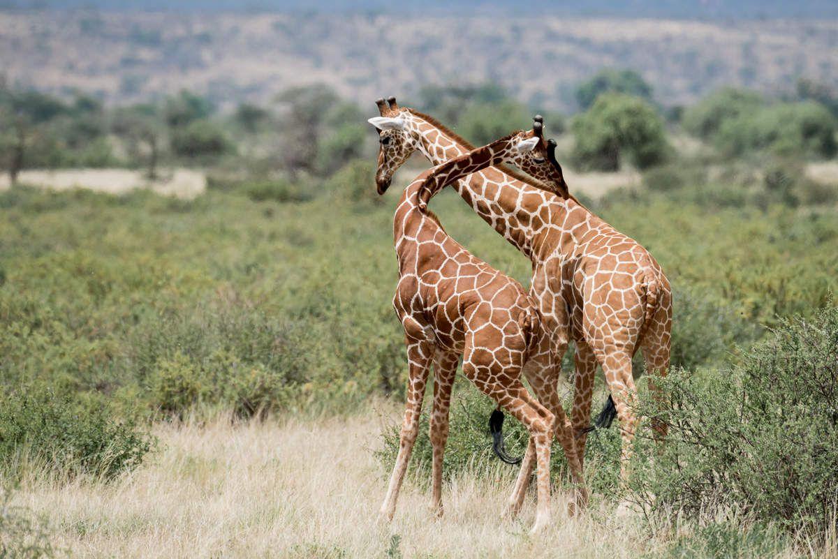 Jeux et combats - Kenya