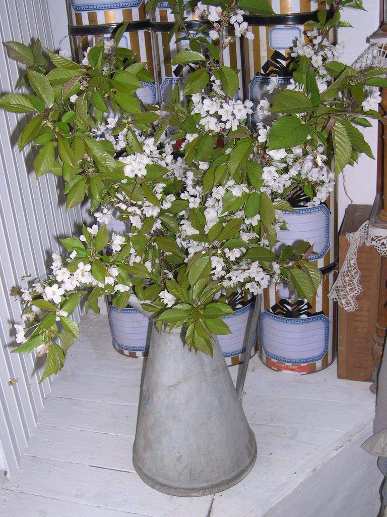 Branches de cerisier sauvage