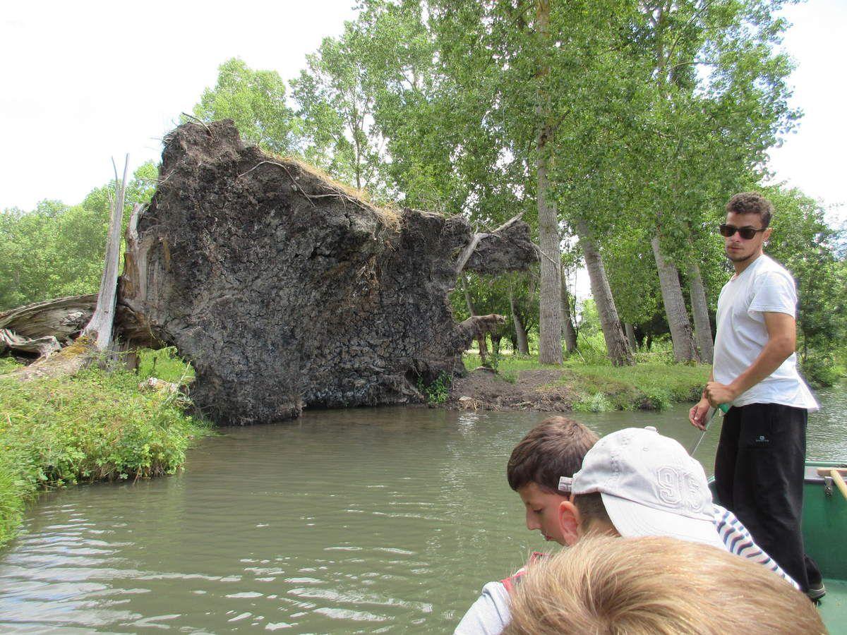"""Les guides ont mis """"le feu"""" au méthane issu de la décomposition des végétaux pris au piège des eaux."""