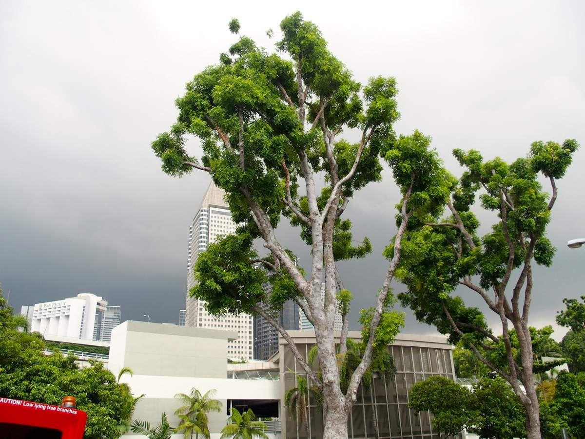 Nous étions dans le bus à impériale, le ciel menaçait ...qq minutes plus tard une averse tropicale oh là là !!!