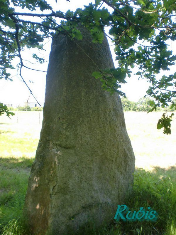 Menhir du Plessis-Gamat ou du Plessis-Gamet, Saint Brevin les Pins