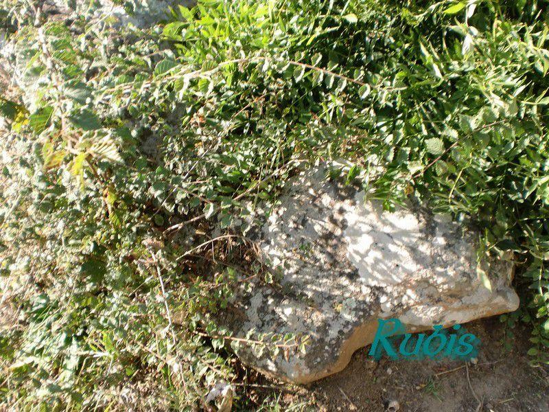 Dolmen 1 ou A de Savatole ou allée couverte du Terrier de la Frébouchère, Le Bernard