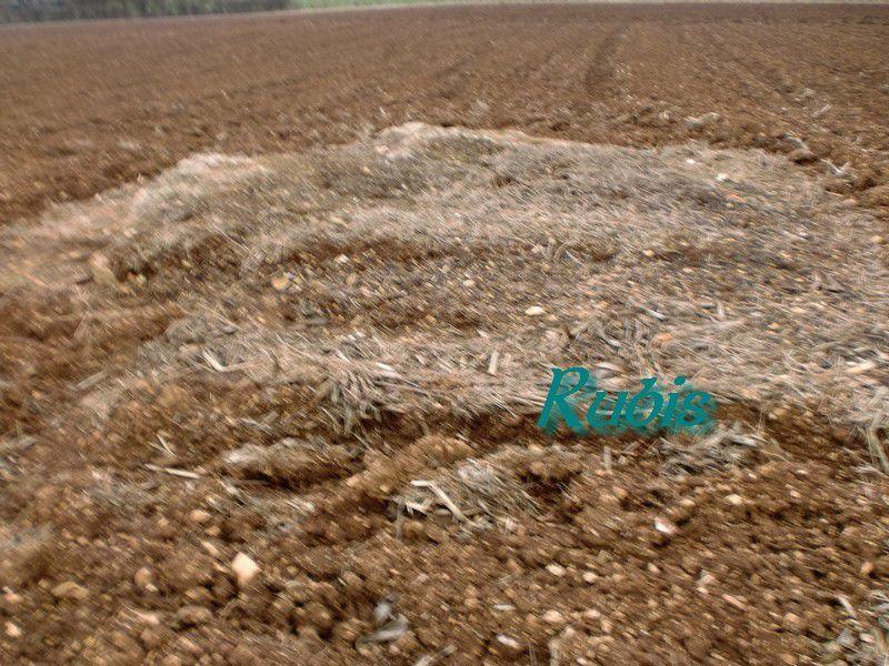 Dolmen de la Pierre Levée ou Pierre qui Vire ou Pierre-Mouilleron ou des Aspics, Nieul sur l'Autise