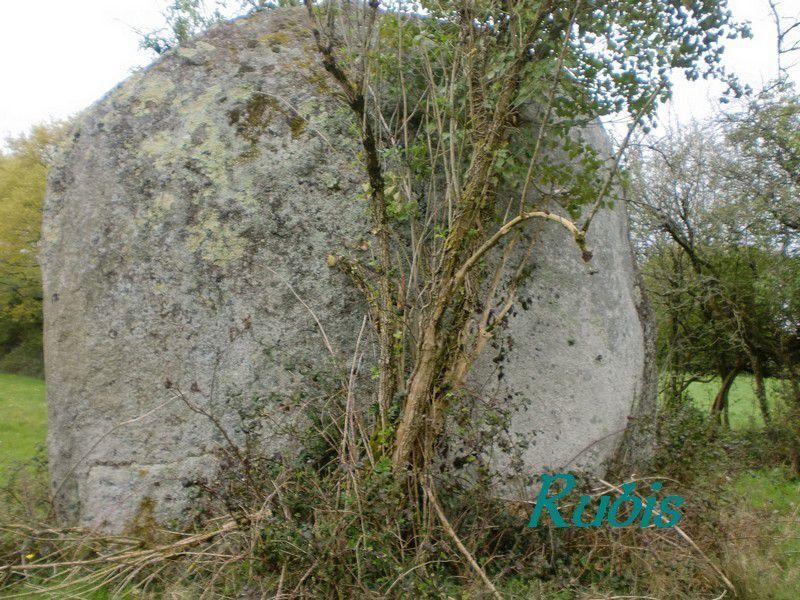 Menhir du Champ du Rocher ou de Puydurand ou menhir éléphant, Avrillé