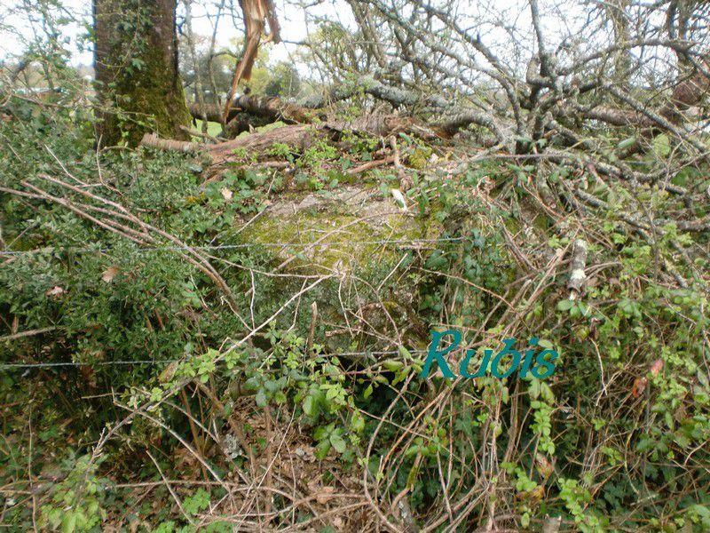 Pierres situées à 20 mètres du menhir