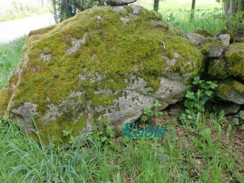Dolmen de Peyro-Coupeliero ou de Fumade ou de Peyre-Fado ou de Pierre Pécoulière ou de Pierre des Fées, Lamazière-Haute