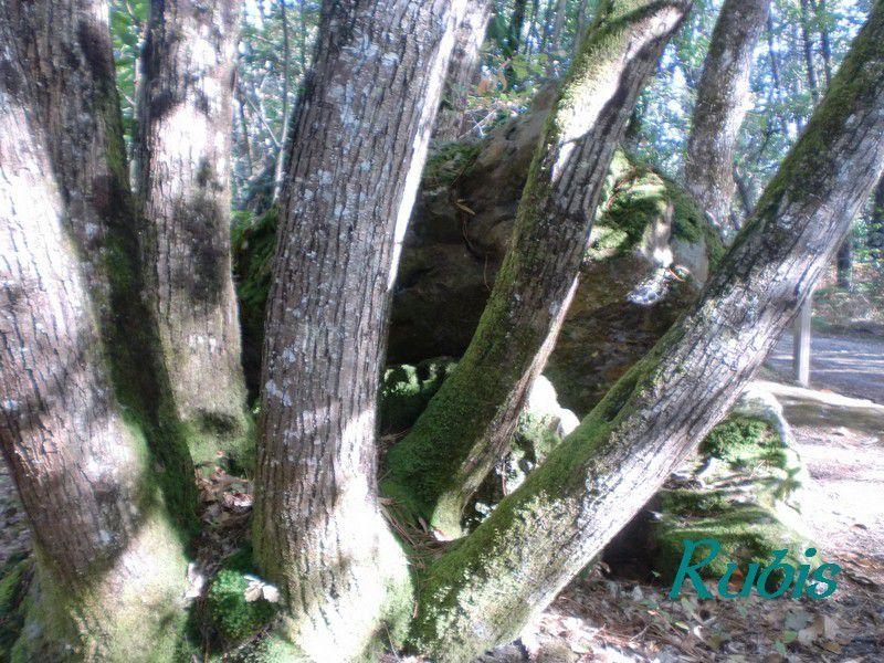Dolmen de Peyre-Brune ou de Peyrebrune, Saint-Aquilin