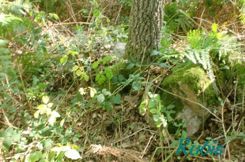 Dolmen du Bois de la Chenaise ou de la Chênaie, Distré