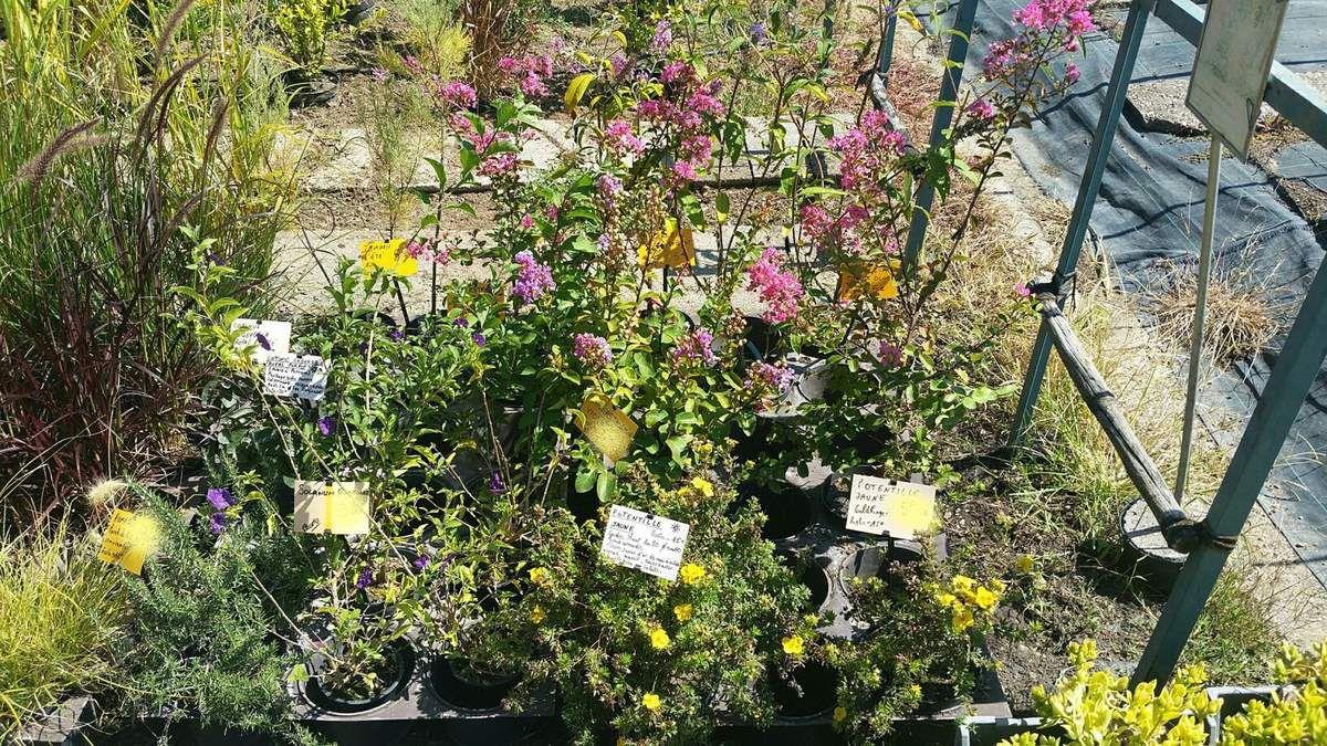 Quelques plantes de la pépinière
