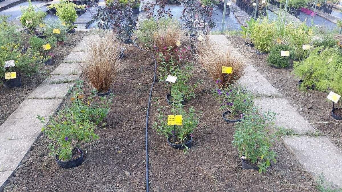 Quelques plantes en pot de la pépinière