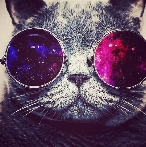 A cat with glasses!!