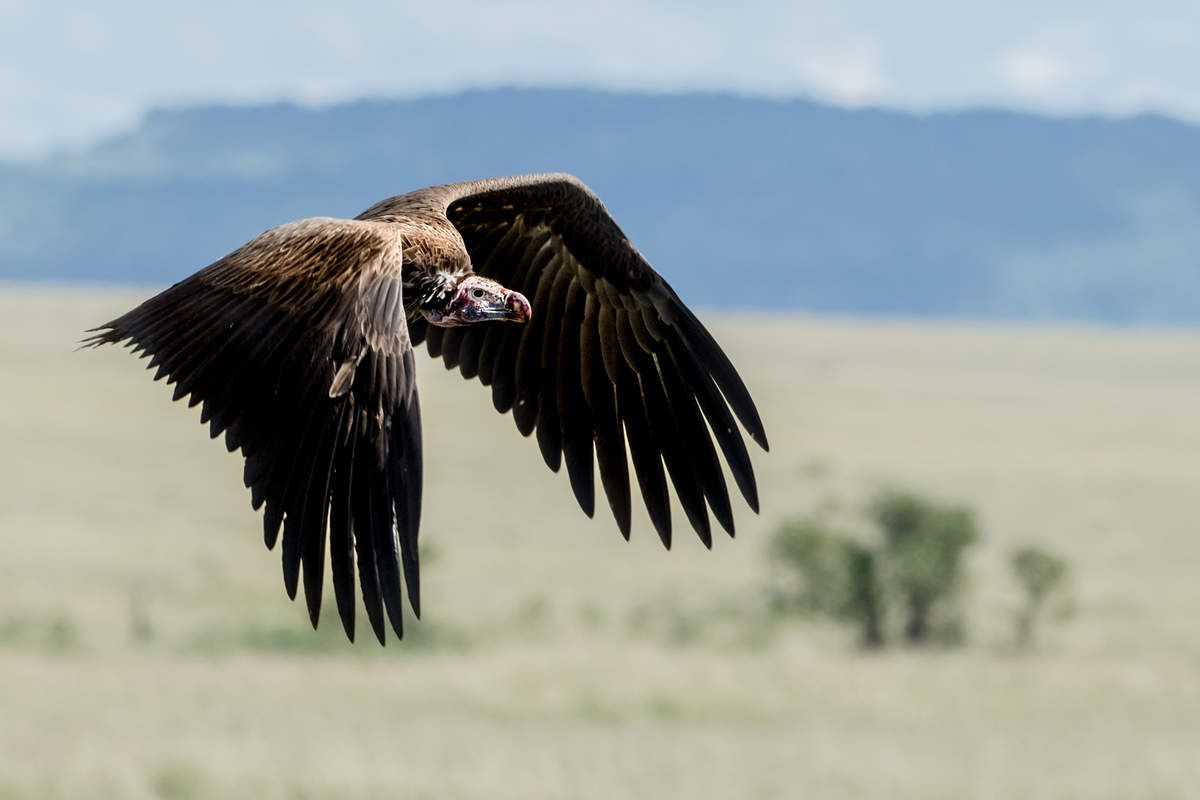Kenya - 4.oiseaux 13 items