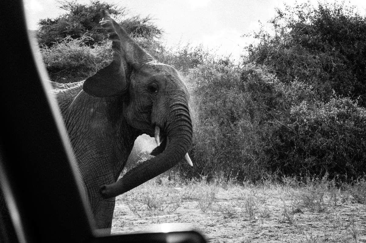 Kenya, 6.Eléphants