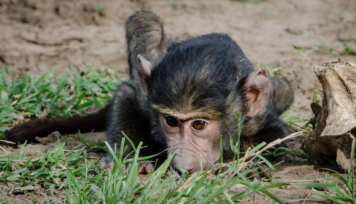 Kenya, 10.Babouins