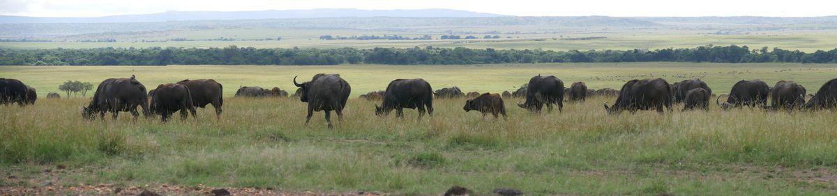 Kenya, 16.sur la route.