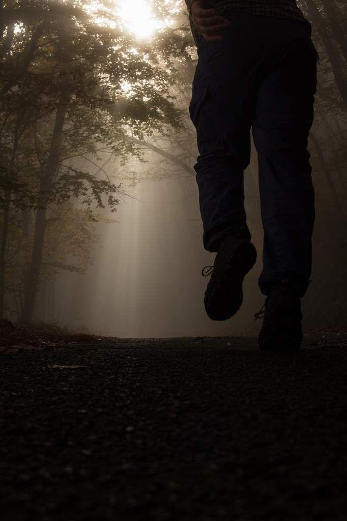 Jeux de lumières dans la forêt