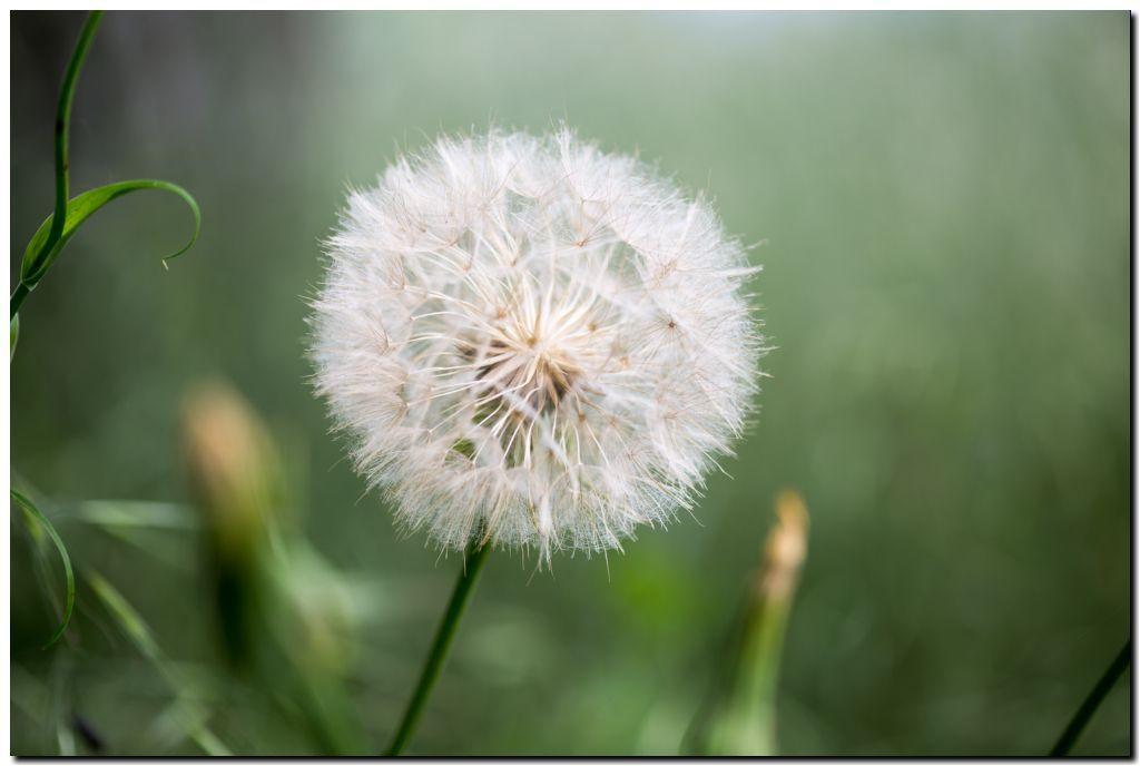 Sélection de mai : Gros plan sur les fleurs