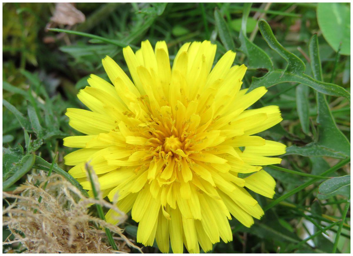 Les fleurs du jardin au printemps esg photo et vid o for Fleurs jardin printemps