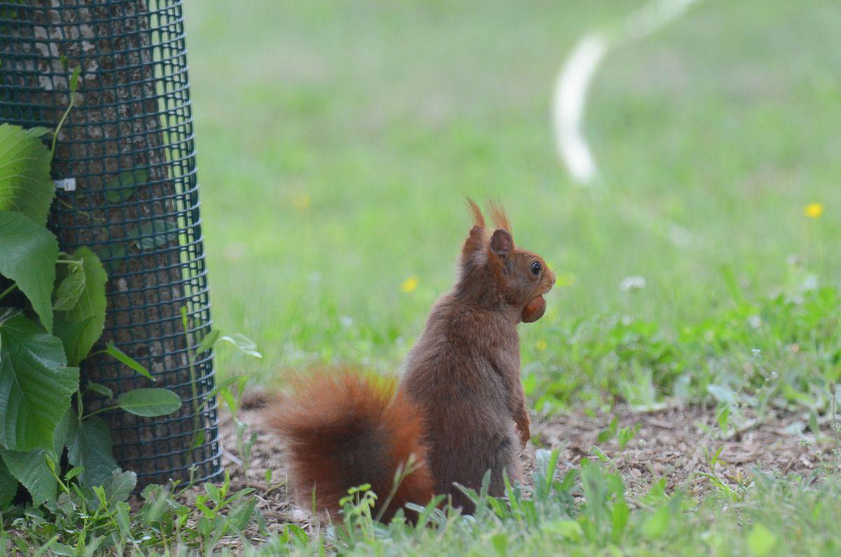 une visite très sympatique au jardin.Photos prises à travers la vitre