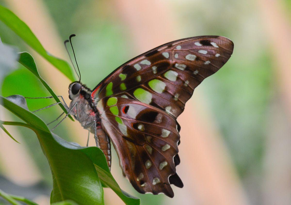 Serre aux papillons au Parc floral à Orléans la Source