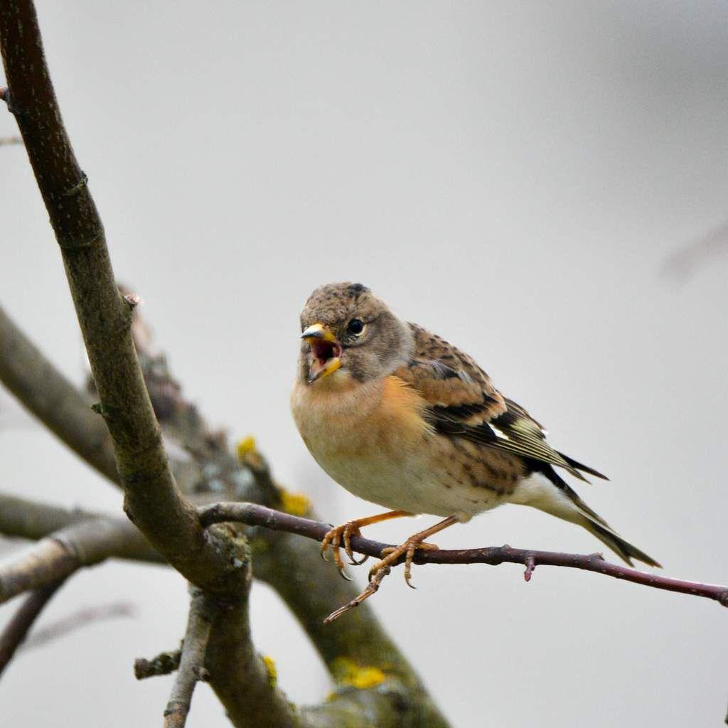 Les Oiseaux en hiver au jardin