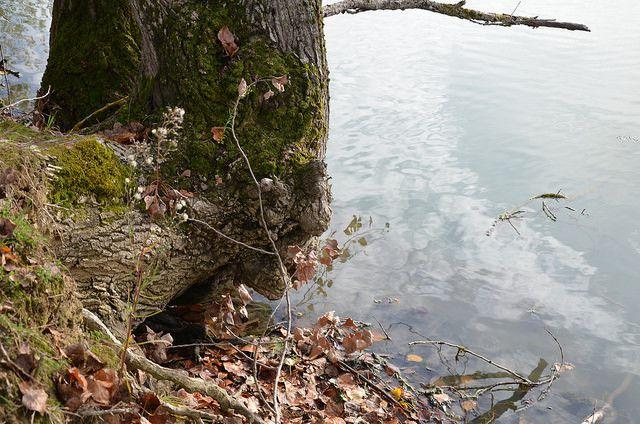 Le bord de l'eau, tout au bord - 1