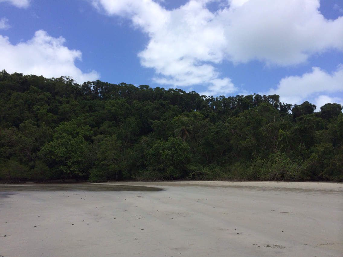 Cape tribulation...