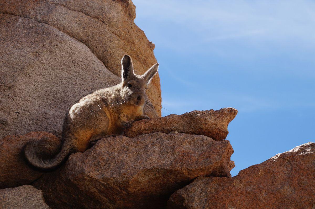 Reisebericht Teil 2: Salar de Uyuni und La Serena