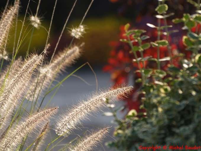 Photos....Flore