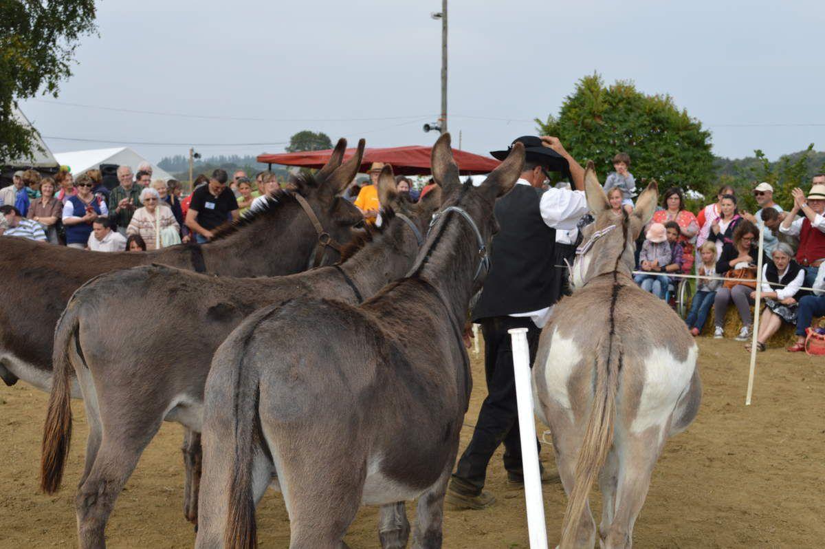 Le salut de Jean-Claude et des ânes pour remercier le public