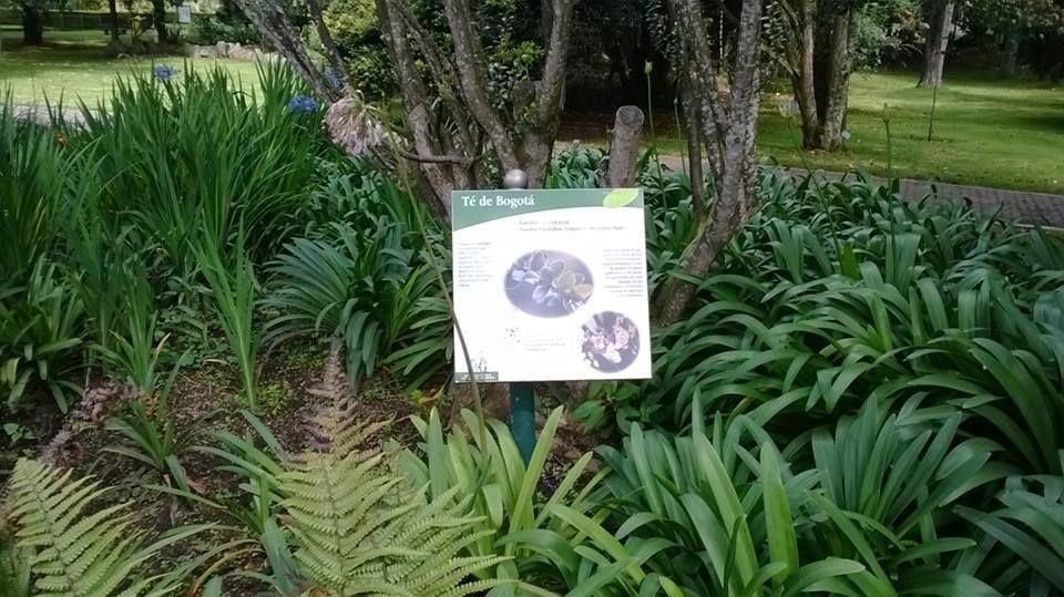 Plantas del recorrido visita al jard n bot nico jos for Plantas de un jardin botanico