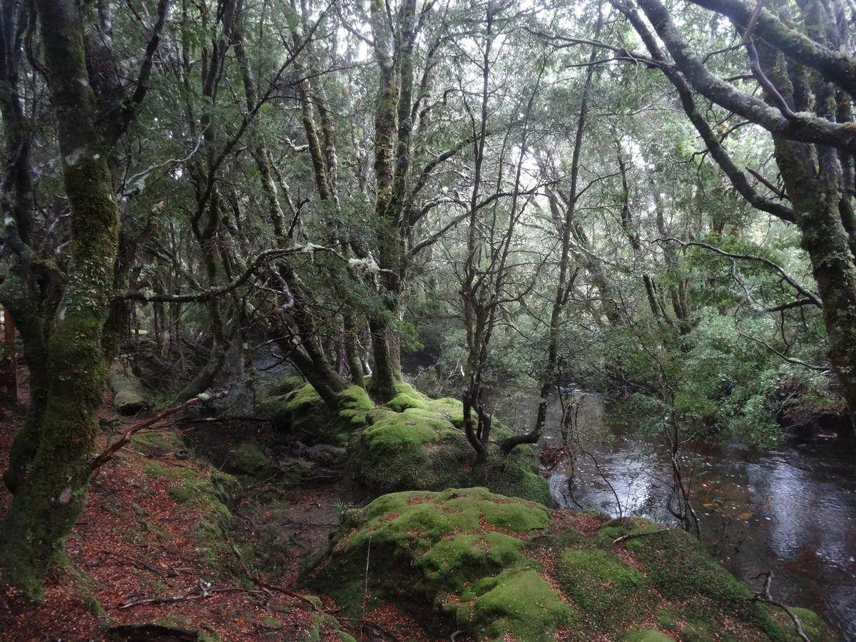 Welcome to Tasmania
