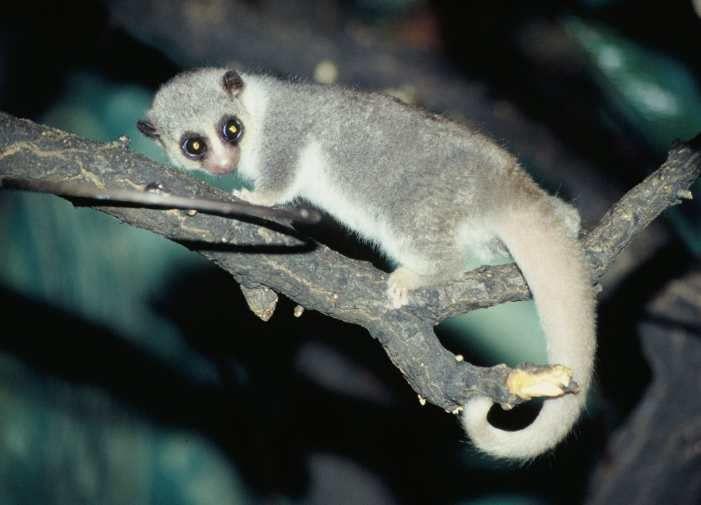Album-Madagascar-Faune