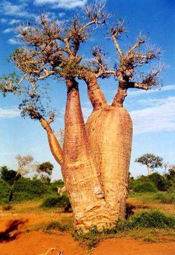 Album-Madagascar-Flore