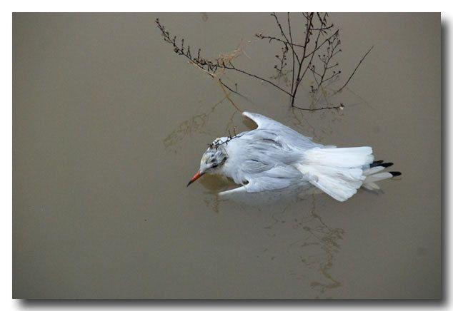 Poème: L'oiseau blessé - Anse Etoile
