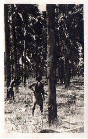Forêt de Satras