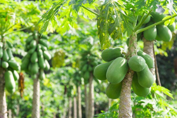 Médecine douce : ces plantes qui soignent à Madagascar
