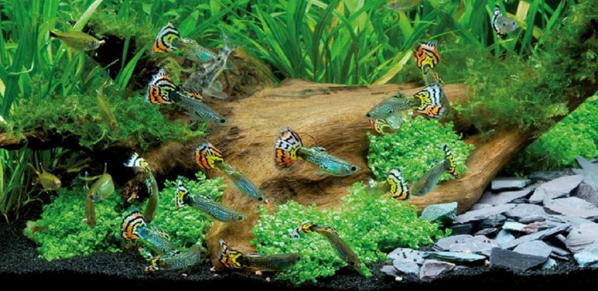 fond d'écran aquarium