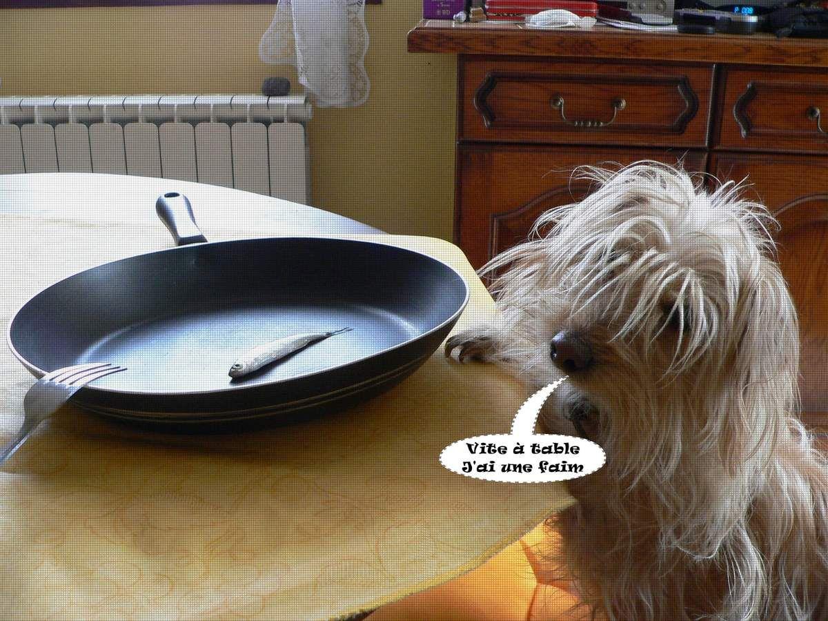 Comment cuisiner l 39 ablette la truite pelussinoise - Comment cuisiner l amarante ...