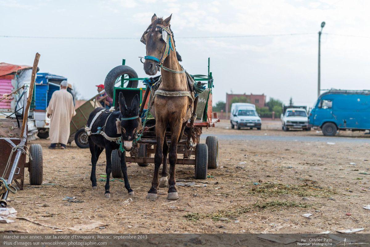 Reportage : Sur la route d'Essaouira. Foire aux chevaux, Maroc