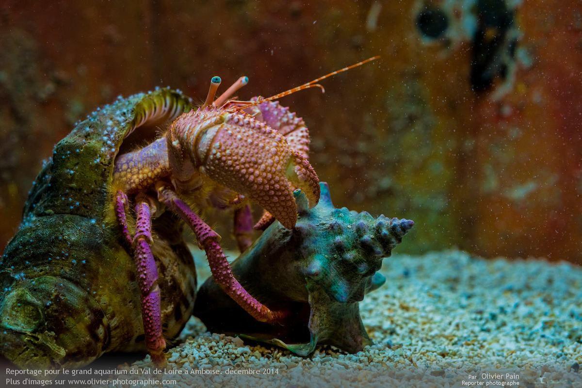 La photo du jour, 29/12/2014 : Reportage pour l'Aquarium du Val de Loire