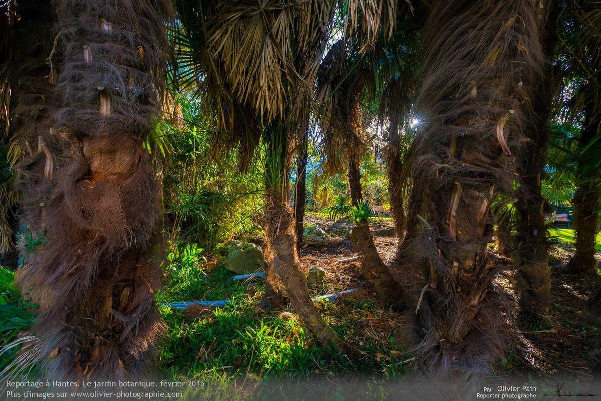 La photo du jour, 10/02/2015 : le jardin des plantes de Nantes