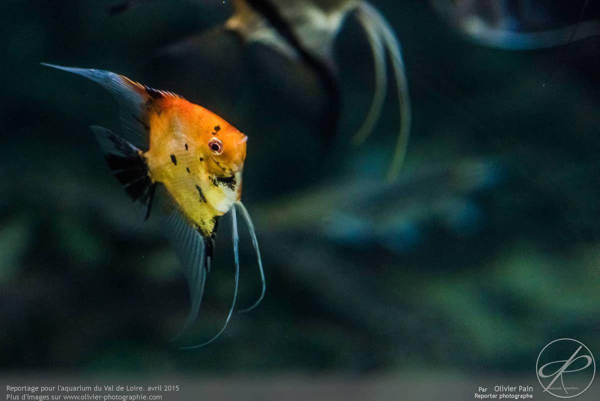 Reportage pour l'aquarium du val de loire à Amboise