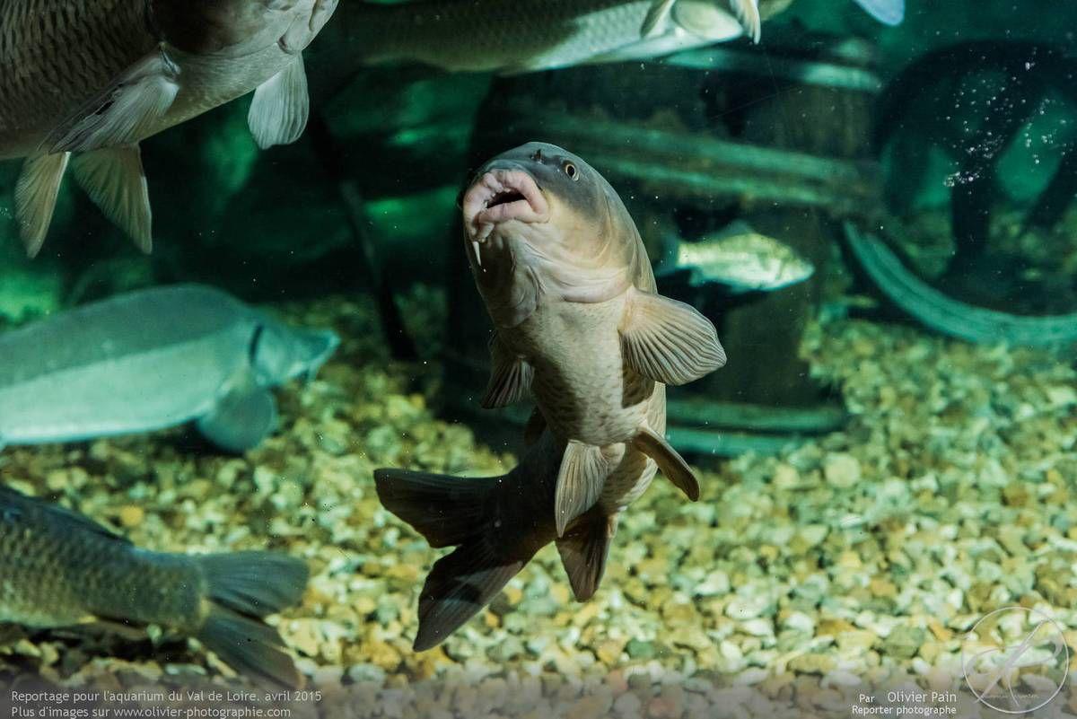 la photo du jour 11 04 2015 reportage dans l aquarium du val de loire reporter photographe
