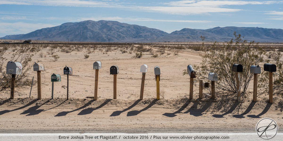 Photoreportage : Joshua Tree, aux états Unis