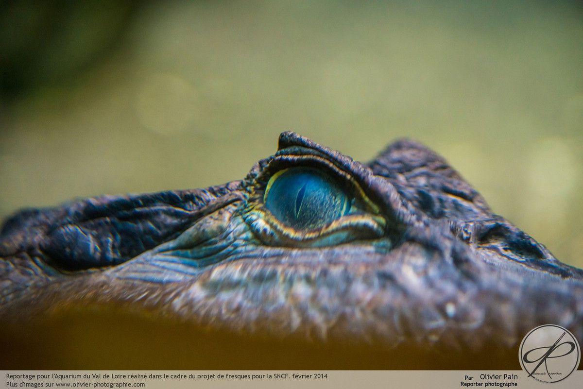 Reportage à Amboise pour l'aquarium du val de loire