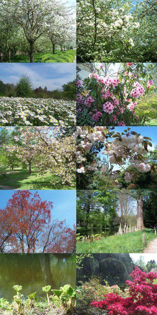 Le printemps. Arboretum de Chatenay-Malabry.