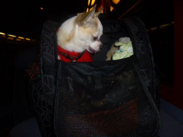 Fatigué sur le retour pas de repos promenades, sac kangourou, sac de voyage très peu pour les changements de train trop de monde et il surveille et ne dort pas !